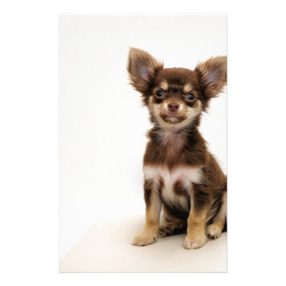 Chihuahua Small Dog Stationery