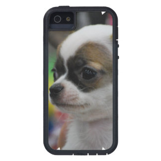 Chihuahua Star Case For iPhone 5