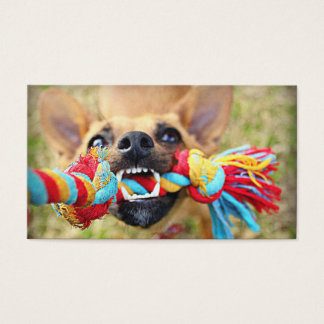 Chihuahua Tug O War Business Card