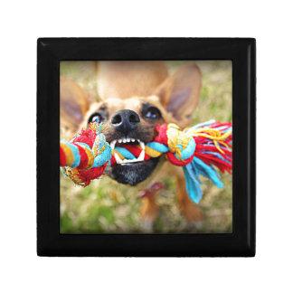 Chihuahua Tug O War Gift Box
