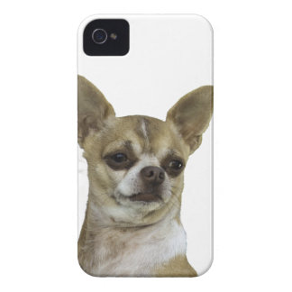 Chihuahua with Attitude Blackberry Bold Cases