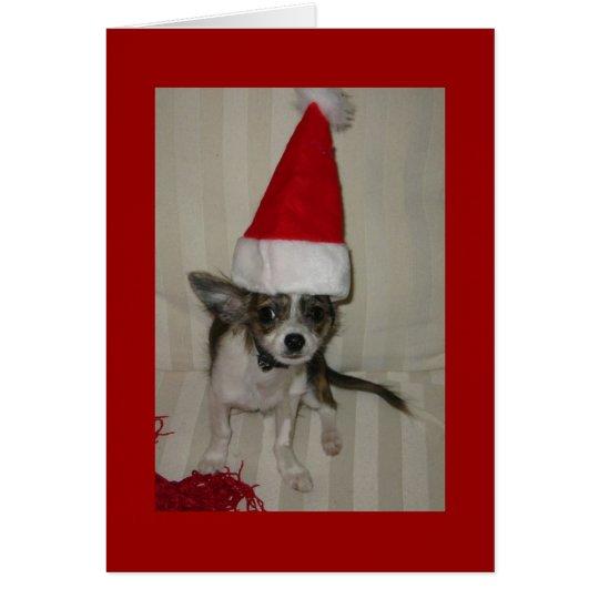Chihuahua xmas Card