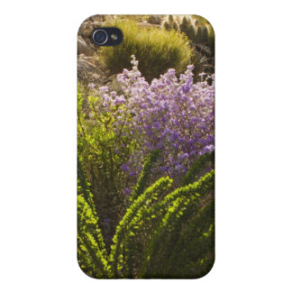 Chihuahuan desert plants in bloom iPhone 4/4S covers