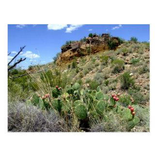 Chihuahuan Desert scene 05 Postcard