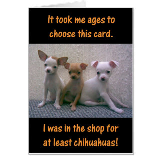 Chihuahuas Card