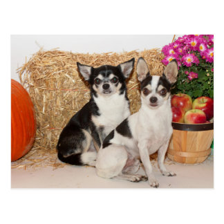 Chihuahua's in the fall postcard