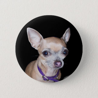 Chihuhahua Looking At You 2 Inch Round Button