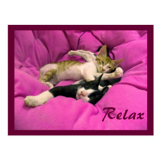 Chill Bill & Relax Max Postcard