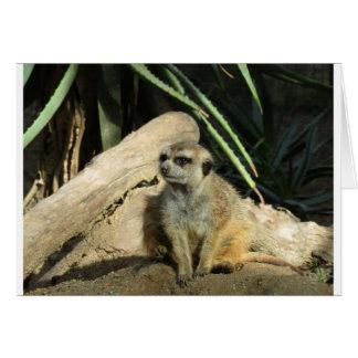 chillin meerkat card