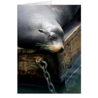 """Chilling I"" Pier 39 San Francisco Sea Lion Photo Card"