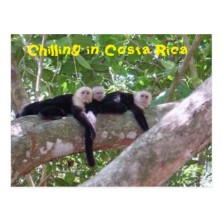 Chilling in Costa Rica Postcard