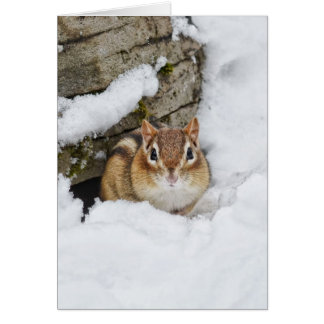 Chilly Little Chipmunk in the Snow Card