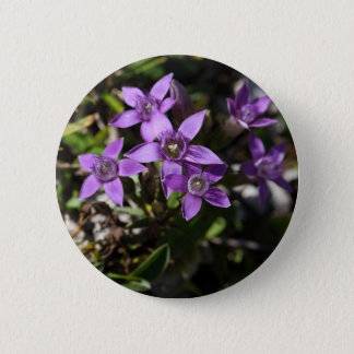 Chiltern gentian (Gentianella germanica) 2 Inch Round Button