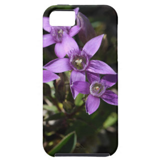 Chiltern gentian (Gentianella germanica) iPhone 5 Cases
