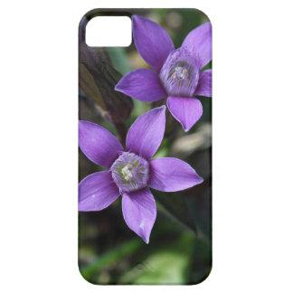 Chiltern gentian (Gentianella germanica) iPhone 5 Covers