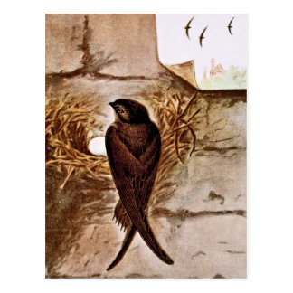 Chimney Swift Postcard