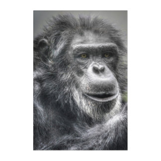 Chimp Acrylic Wall Art
