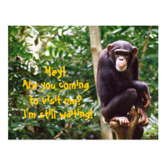 Chimp Humour Postcard
