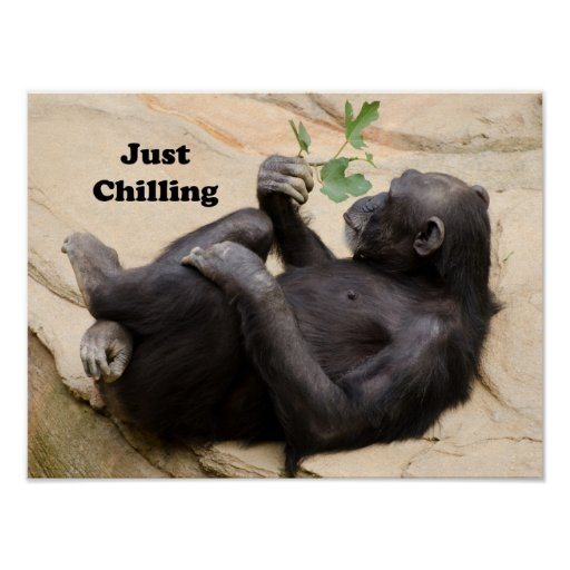 Chimp just chilling poster