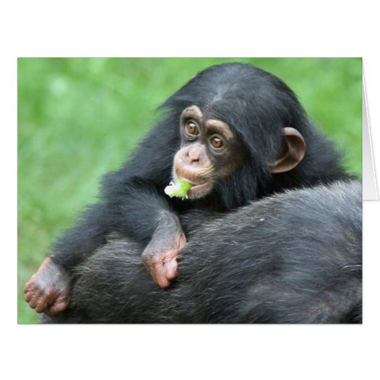 Chimpanzee 005 card