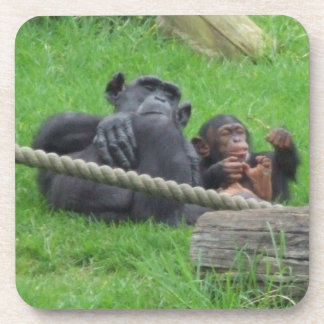 Chimpanzee Coaster