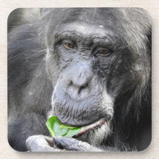 Chimpanzee Coasters