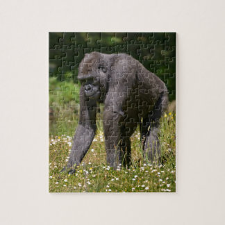 Chimpanzee in the flowering grass jigsaw puzzle