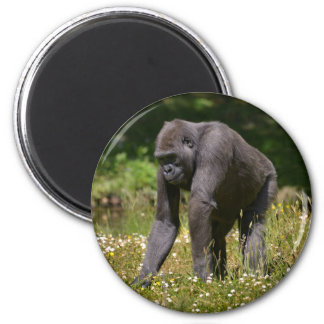 Chimpanzee in the flowering grass magnet
