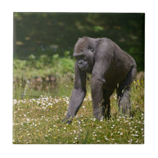 Chimpanzee in the flowering grass tile