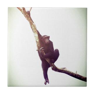 Chimpanzee in Tree Ceramic Tile