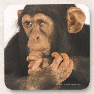 Chimpanzee (Pan troglodytes). Young playfull 2 Beverage Coasters