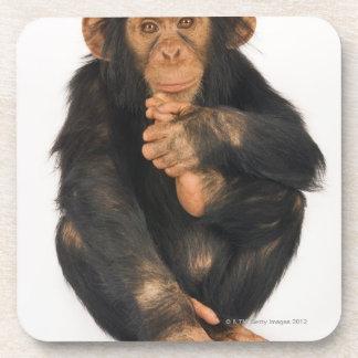 Chimpanzee (Pan troglodytes). Young playfull Drink Coasters