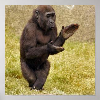 Chimpanzee Poster Print