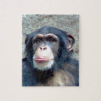 Chimpanzee Puzzles