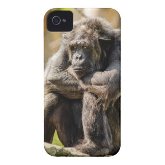 Chimpanzee Sitting on Gray Stone Case-Mate iPhone 4 Case
