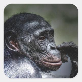 Chimpanzee Square Sticker