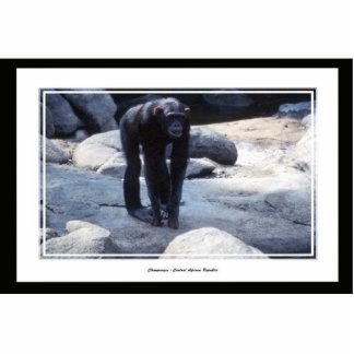 chimpanzee standing photo sculpture