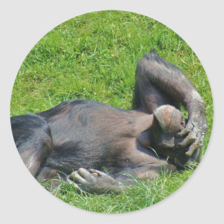 Chimpanzee - Sticker