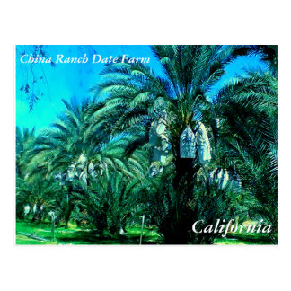China Ranch Date Farm - California Post Card