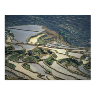 China, Yunnan Province. Flooded rice terraces of Postcard
