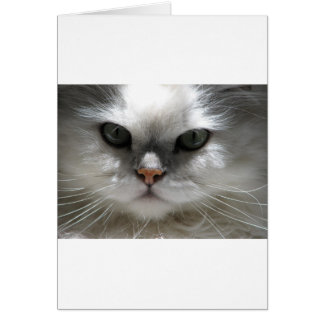 Chinchilla Persian Cat Card