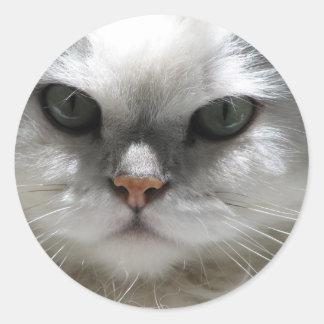 Chinchilla Persian Cat Classic Round Sticker