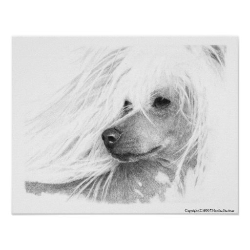 Chinese Crested Dog Print
