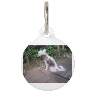 Chinese_Crested_Dog sitting Pet Name Tag