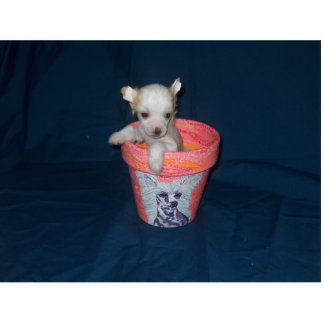 Chinese Crested Puppy Photo Sculpture