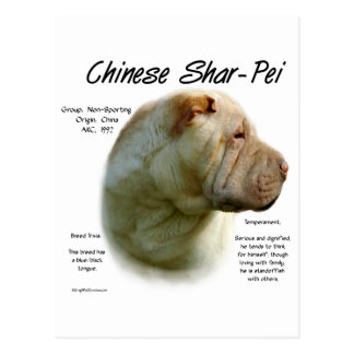Chinese Shar Pei History Design Postcard
