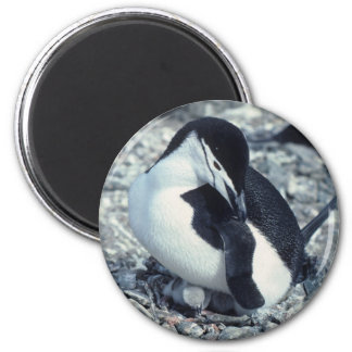 Chinstrap Penguin 2 Inch Round Magnet
