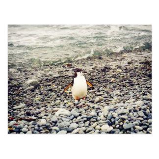 Chinstrap Penguin, postcard