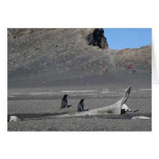 Chinstrap penguins (Deception) card