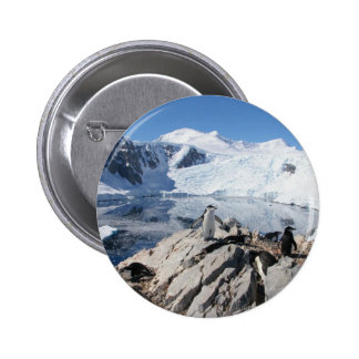 Chinstrap Penguins in Antarctica Pinback Button